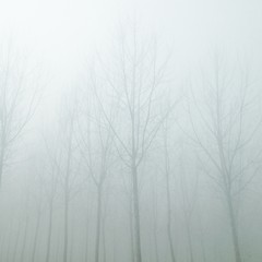 Fototapeta Low Angle View Of Bare Trees During Foggy Weather