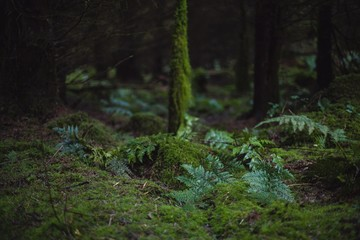 Moss Growing In Rainforest