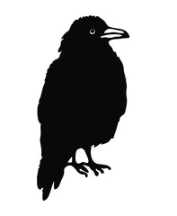 Black raven illustrated by ink on a white background. Vector. Image of a bird, crow, jackdaw, magpie. Occultism, mysticism, shamanism, symbol, magic. Chinese style, oriental.