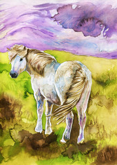 watercolor illustration depicting a white pony in the bosom of nature in a mountainous landscape.
