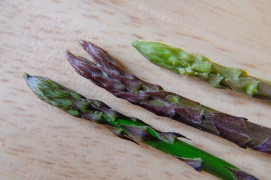 """wild asparagus harvest, one of which is """"Siamese"""""""