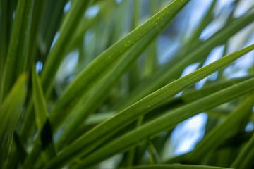 Canvas Prints Palm tree Palm leaf