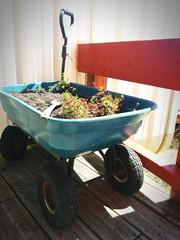 Close-up Of Plants In Wheelbarrow