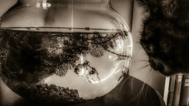 Cropped Image Of Cat Looking At Fish Tank At Home