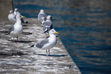 Seagulls resting on the breakwater at takamatsu fishing port , Takamatsu city, Kagawa, Shikoku, Japan