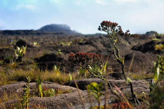 La vegetación típica del Monte Roraima, ubicado en Venezuela