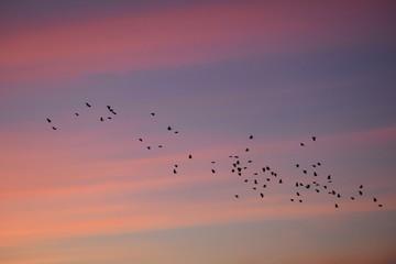 Printed roller blinds Bird Birds at sunrise