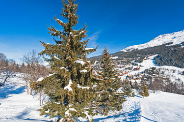 Wall Mural - Panoramic view down snow covered valley in alpine mountain range with conifer pine trees