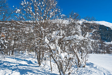 Wall Mural - Snow covered trees in winter on mountain