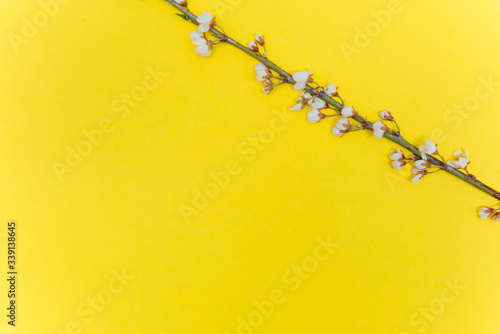 Frame from sprigs of the apricot tree with flowers on yellow background. Place for text. The concept of spring came, mother's day, 8 march. Top view. Flat lay Hello march, april, may