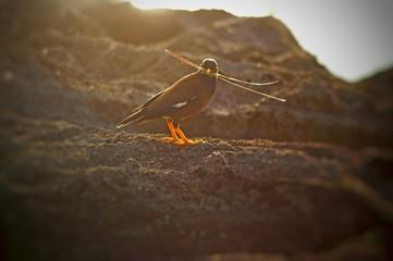 Bird With Twigs In Beak Perching On Rock Fototapete