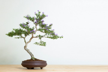 Foto op Plexiglas Bonsai bonsai tree in pot on wood table copy space texture backgrond advertising