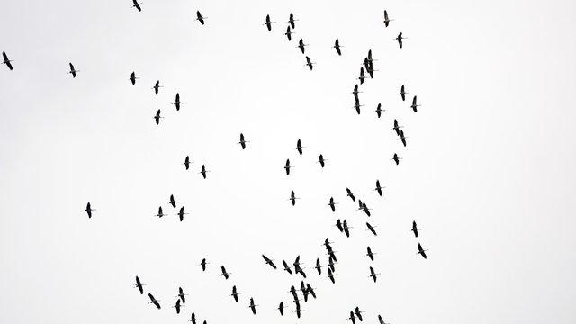Storks are flying