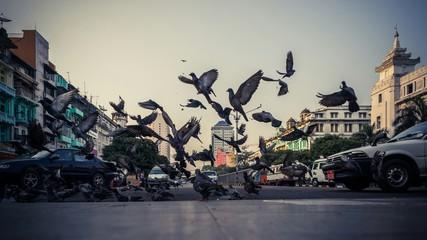 Pigeons Flying On City Street Fototapete