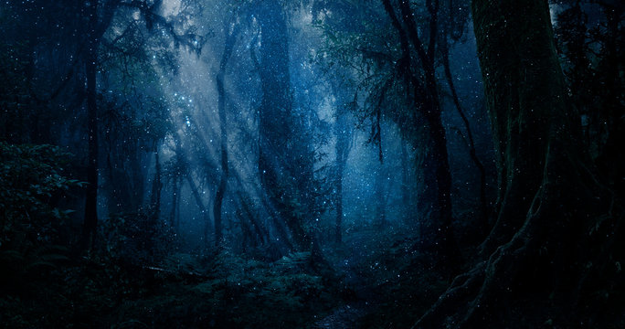 Magic forest with points of light