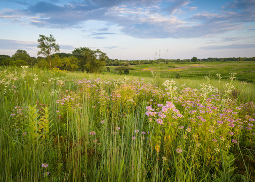 Sunset light on an expansive landscape of late summer prairie wildflowers.