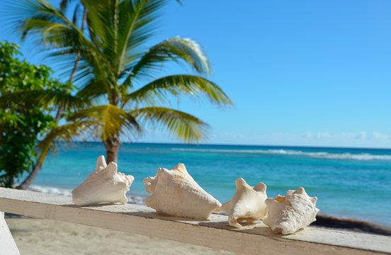 Muszle na tarasie domku przy plaży na wyspie Saona, Dominikana