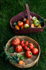 Homegrown fresh heirloom tomatoes
