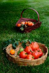 Heirloom homegrown fresh tomatoes