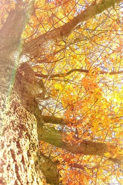 Low Angle View Of Autumn Tree