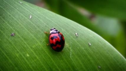 Fototapeta Close-up Of Ladybug On Leaf obraz