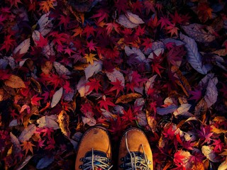 Cropped Shoes On Autumnal Leaves Wall mural