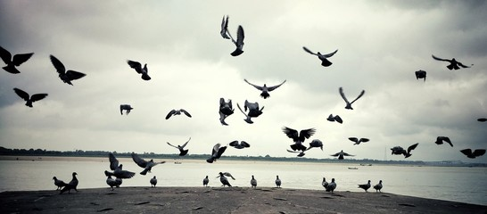 Pigeons Flying By Lake Against Cloudy Sky Fototapete