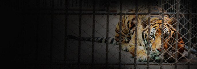 Banner of tiger in the cage Wall mural
