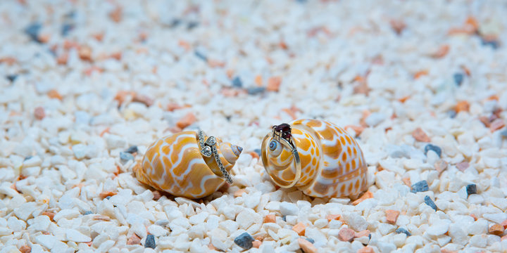 Two silver rings showcased on sea shells