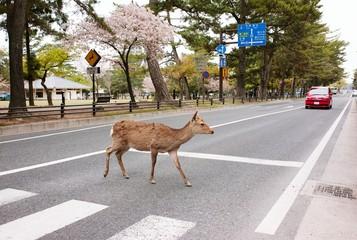 Deer Crossing Road Against Trees