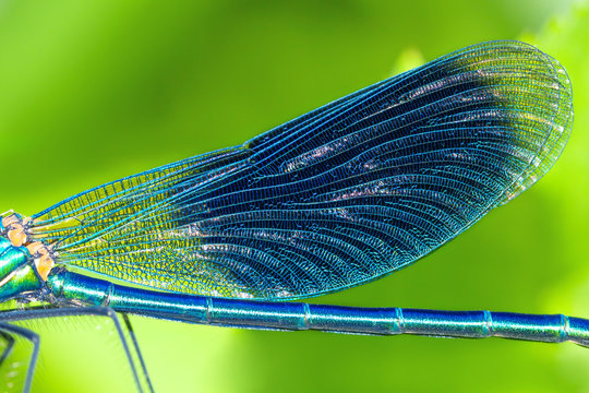 detail insect blue wings dragonfly closeup