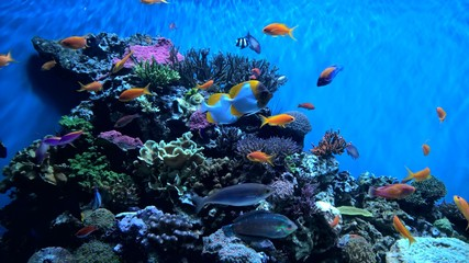 Photo Blinds Coral reefs coral reef and fish