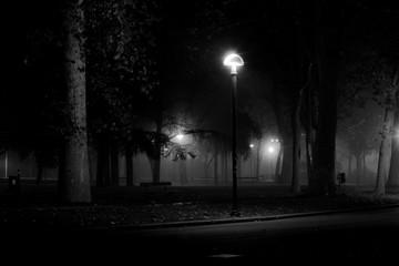 Fototapeta Illuminated Lamp Post Against Trees In Park At Night