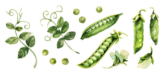 Green peas.  Hand drawing watercolor. Can be used for postcards, stickers, encyclopedias, menus, ingredients of dishes. Style design for the label, cover, prints . Papier Peint
