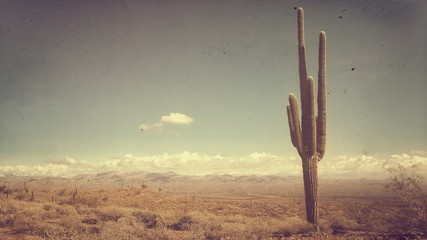 Fototapeta Saguaro Cactus And Plants Growing On Field