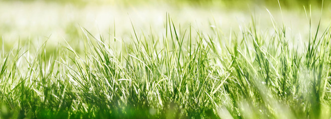 Fotoväggar - gras wiese natur sonne banner bokeh