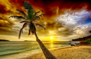 Sunset over a palm tree in Seychelles