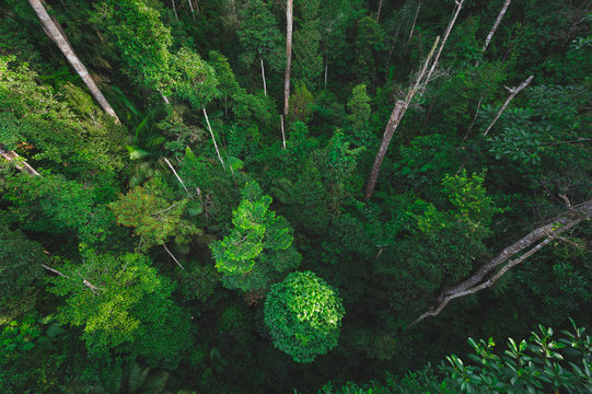 Earth Day eco concept with tropical forest background, natural forestation preservation scene with canopy tree in the wild, concept on sustainability and environmental renerable