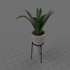 Plant in concrete planter