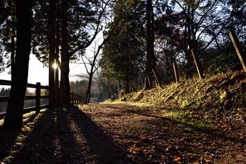 Fototapeta Empty Road Passing Through Forest