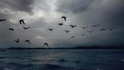 Fototapeta Flock Of Birds Flying Over Cloudy Sky
