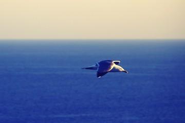 Photo sur Aluminium Dauphins Seagull Flying Over Sea Against Sky