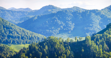 Wall Mural - Mountains covered with forest, summer sunny day, panoramic view