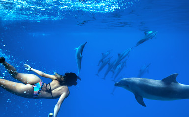 Wall Mural - A girl swimmer wearing bikini swimming and diving with wild dolphins in blue sea water tropical background
