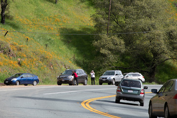 People take photographs of a bloom of wild poppies in Amador County during the coronavirus disease (COVID-19) outbreak in Jackson