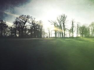 Fototapeten Khaki Bare Trees On Countryside Landscape Against Sky