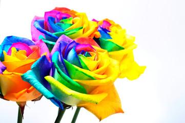 Fototapete - Bouquet of Rainbow rose