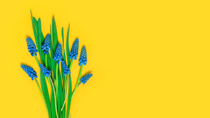 Foto op Canvas Bloemen Flowers composition. Blue spring muscari on a yellow background, flat lay, free space for text. Spring or summer floral background, copy space.