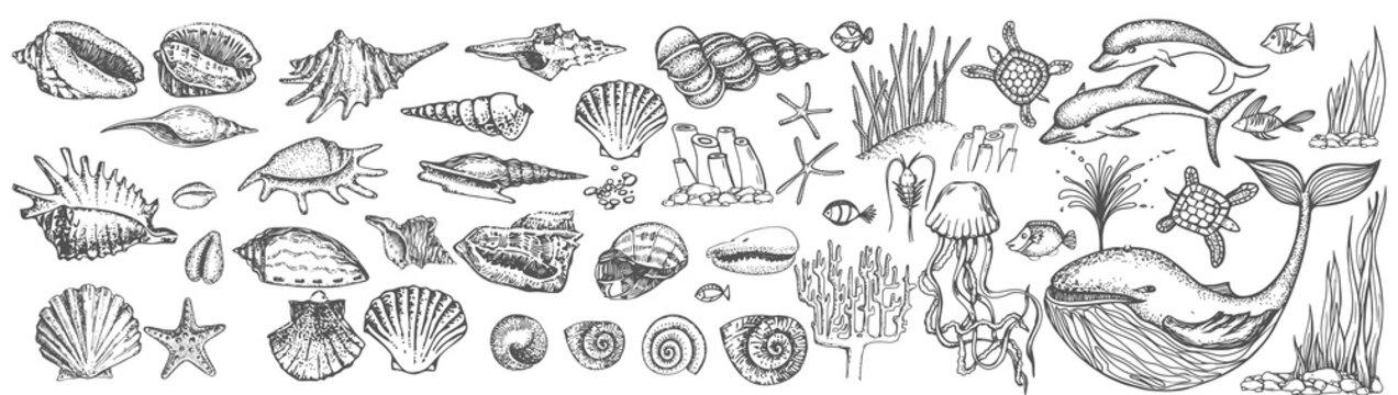 Big set of shells and sea animals