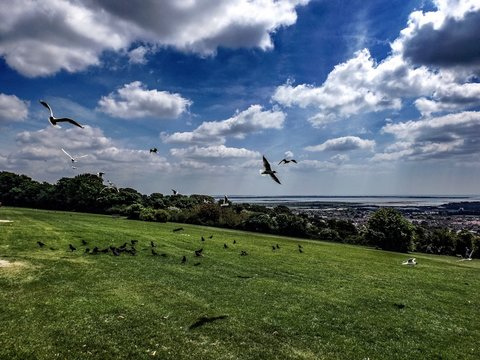 Birds Flying Over Field Against Sky
